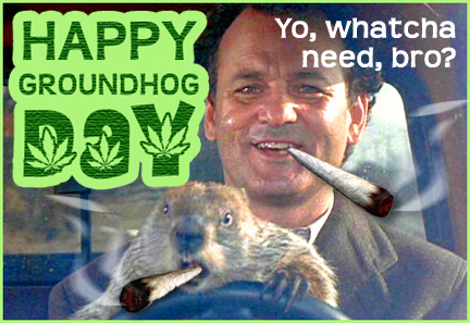 Bill Murray Groundhog Day Pot Bust